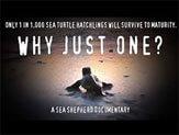 Wildlife rescue documentary - Sea shepherd