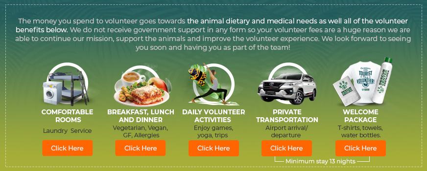 Volunteer program in Costa Rica